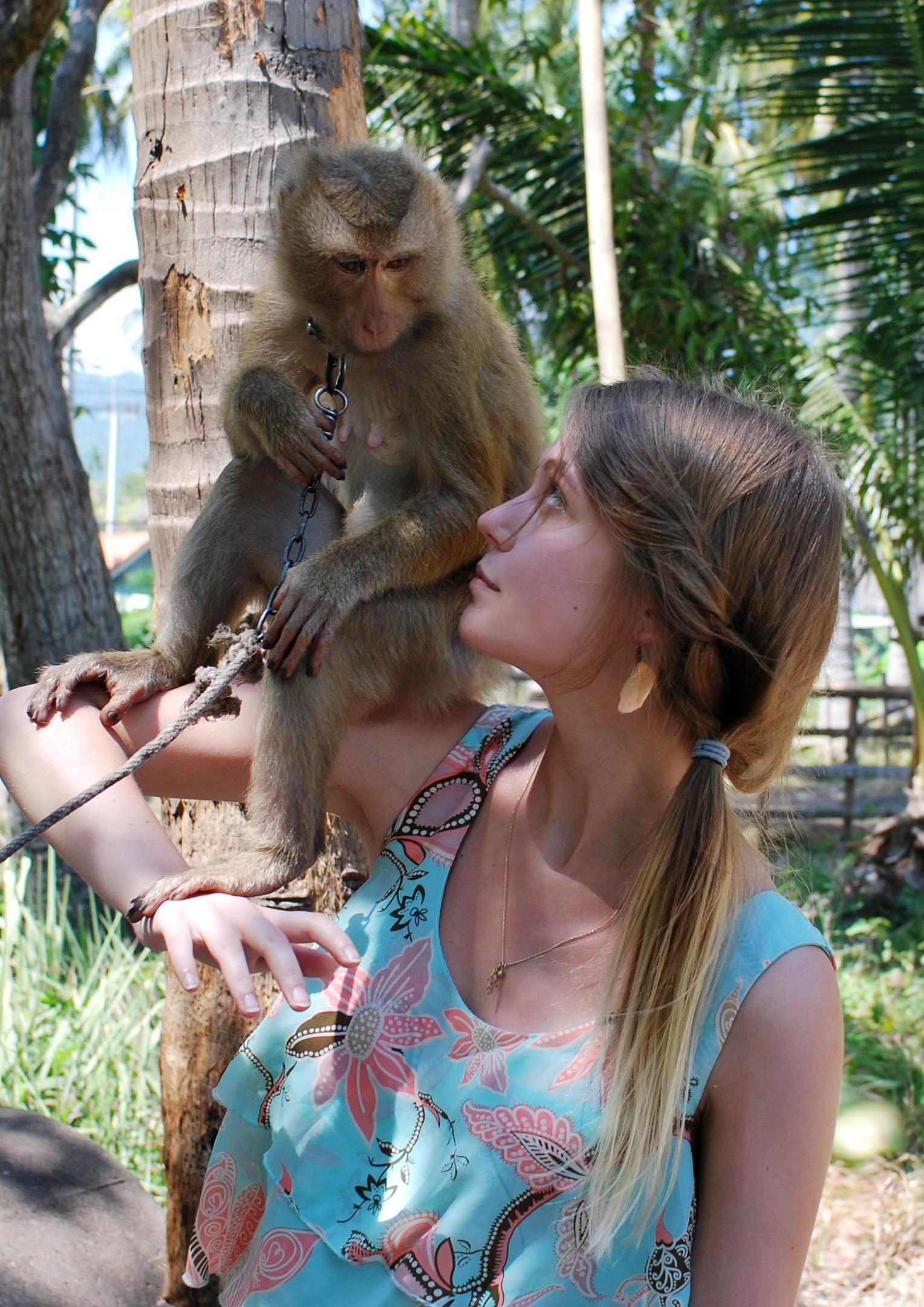 monkey show 3